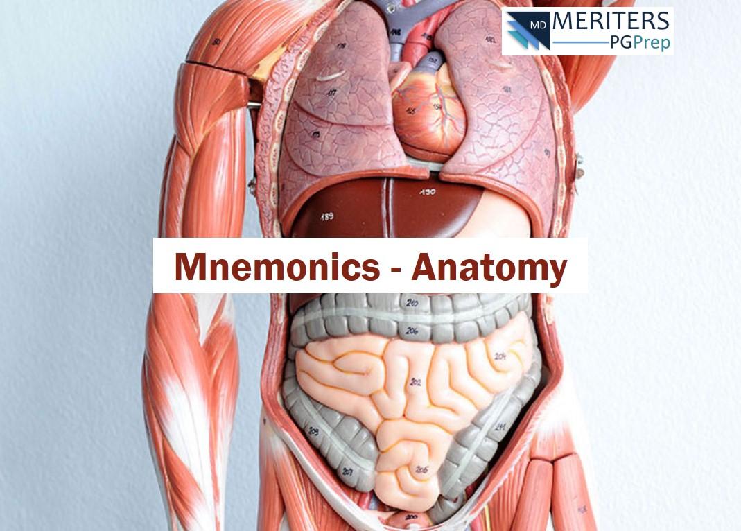 Neet Pg Anatomy Mnemonics